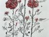 マウリリアの薔薇