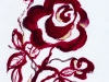 Drawing Rose 2018-II
