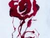 Drawing Single rose